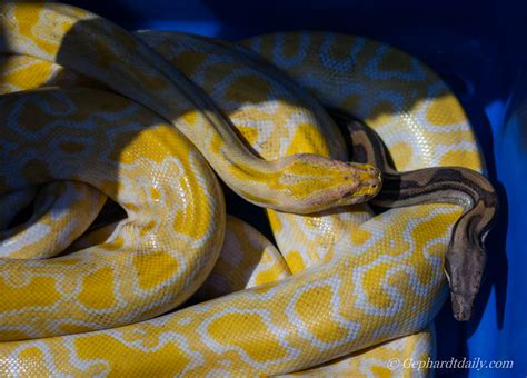 rescue utah utah reptile rescue loses centerville home hundreds of snakes lizards gators must