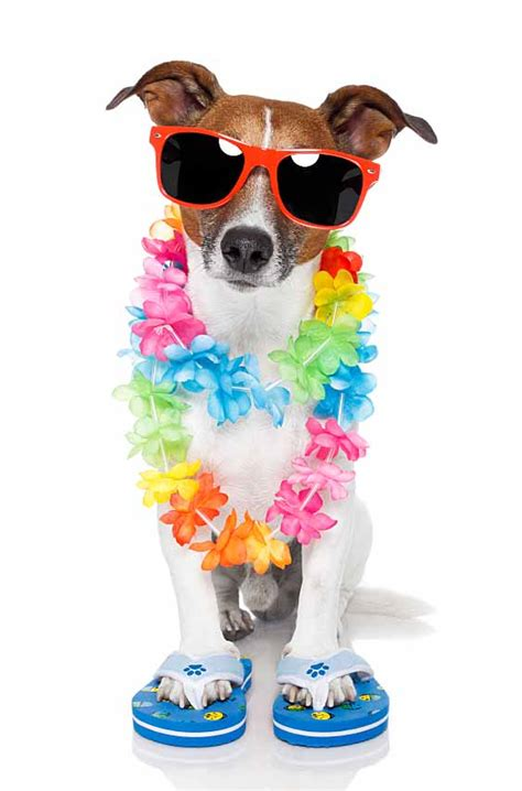 hawaiian names for dogs related keywords suggestions for hawaiian pet names dogs