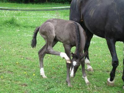 pferde decken lassen pferdekauf welche pferderassen eignen sich f 252 r anf 228 nger