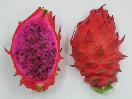 5 fruits of israel the new variety is developed in cooperation with the