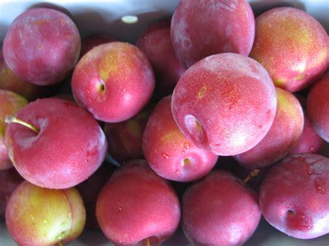 michigan plum growers type of plums