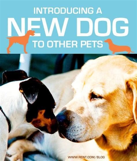 Introducing My New Puppy by Introducing A New To Other Pets See More Ideas About