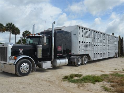 cargill employees to complete beef cattle transportation education beef news