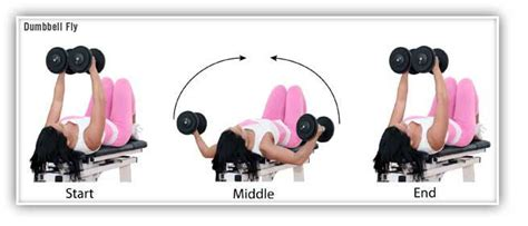 flat bench dumbbell flye 17 best images about chest on pinterest leg workouts