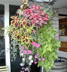 Gartengestaltung Mit Steinen Bilder 3595 by Gartengestaltung Atemberaubende H 228 Ngende Blumbenk 246 Rbe