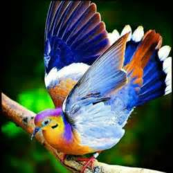 most colorful birds most beautiful colorful bird 2013 photography picture