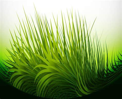 adobe illustrator grass pattern abstract green grass bright vector illustration free