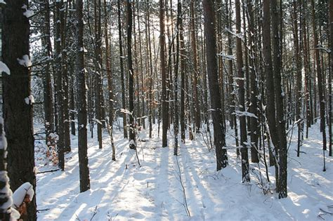 imagenes de invierno tumblr invierno tumblr buscar con google alex pinterest