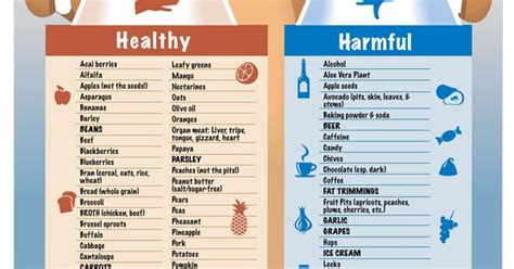 healthy human food for dogs quot healthy vs harmful food for your dogs quot infographic by cityleash a note about