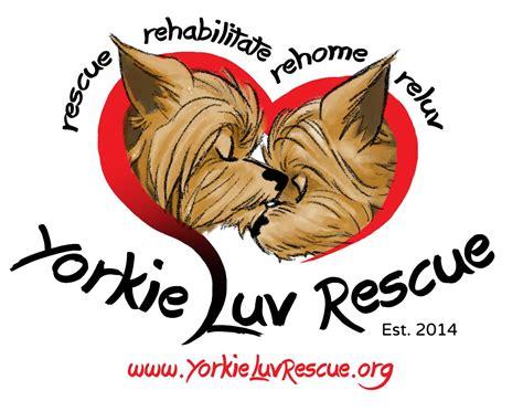yorkie rescue az arizona pet shelters petshelters org