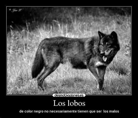 imagenes de negro lobo los lobos desmotivaciones