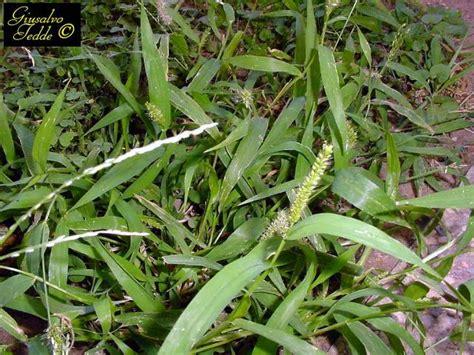 piccola area di terreno con erba e fiori lemiepiante enciclopedia dei fiori e delle piante