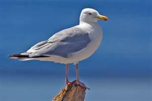 south carolina birding by season fall 187 bird watcher s digest