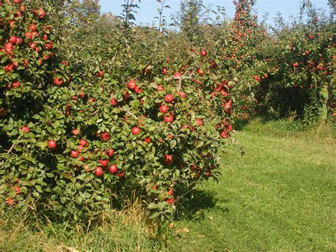 apple orchard milwaukee kukhnya mn mondays pine tree apple orchard
