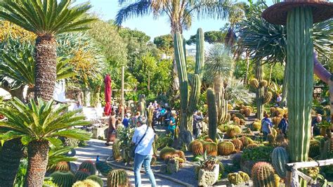 giardino ischia ischia prezzi e giorni d ingresso giardini ravino italia c