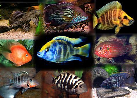 los peces de la animales vertebrados los peces