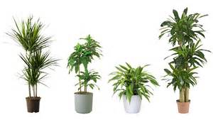 15 indoor air purifying plants for your apartment or home 6sqft