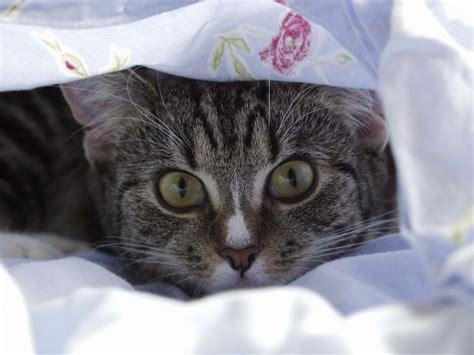 wann wird katze ruhiger warum katzen schmollen geliebte katze magazin