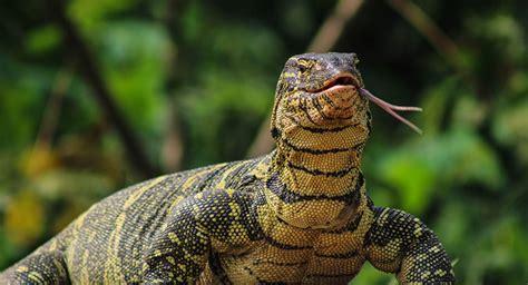Lu Reptil un des plus anciens reptiles au monde retrouv 233 dans le
