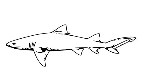 printable shark images free printable shark coloring pages for kids