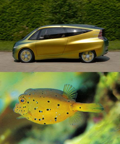 Fisch Auf Auto by Mercedes Fish Inspired Car Was Based On Junk Science