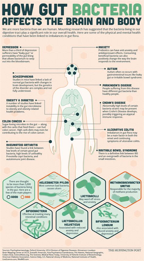 best gut bacteria gut health articles archives page 10 of 19 gut