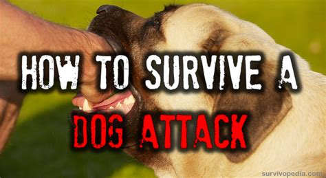 how to your not to bite other dogs how to survive a attack survival
