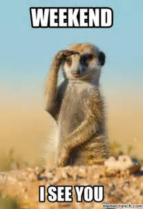 Weekend Meme - weekend meerkat