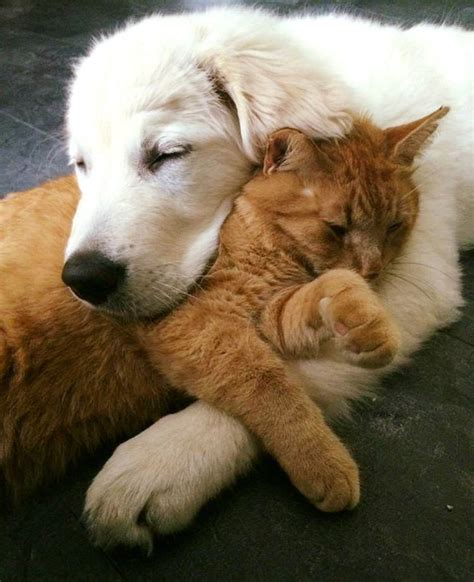 puppy and kitten cuddling puppy tried to win cat and a month later they became cuddle buddies top13