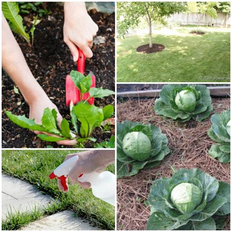 how to kill weeds in a vegetable garden how to get rid of weeds in vegetable garden how to kill