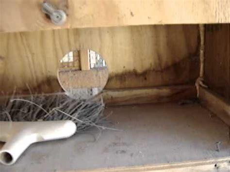 quail nesting box youtube