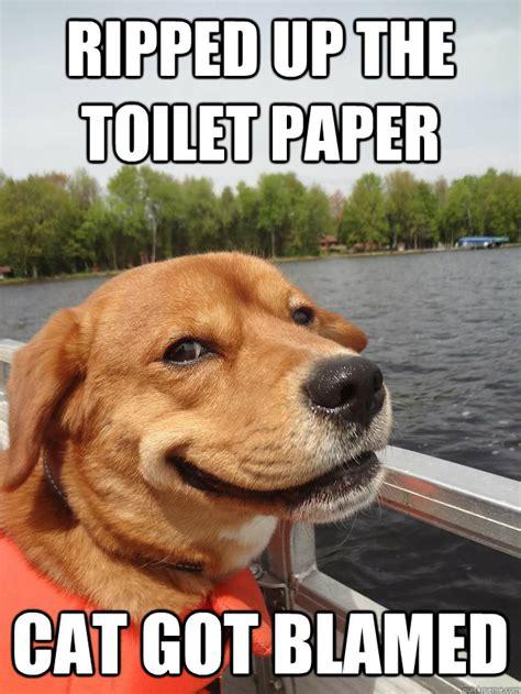 Newspaper Cat Meme - ripped up the toilet paper cat got blamed cat got blamed