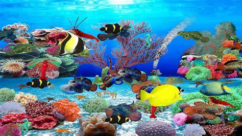 best fish screensaver top 10 best live aquarium fish screensaver best of 2018