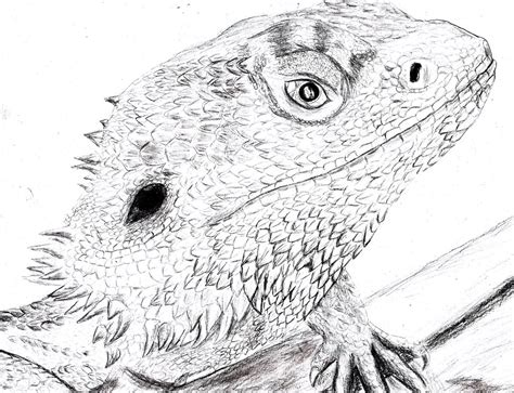 bearded dragon pogona vitticeps by spynder4 on deviantart