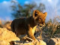 African Animals Wallpaper Zoo