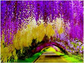 Flower Tunnel by Travel Trip Journey Kawachi Fuji Gardens Japan