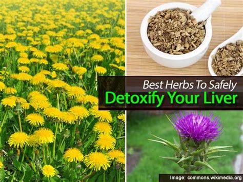 Herbs To Detox Your Liver by 154 Best Liver Detox Images On Liver Detox