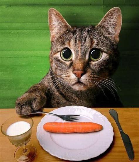 cat dinner 1funny - Cat Dinner