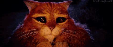 imagenes gif tumblr imagenes gif gato de shrek imagui