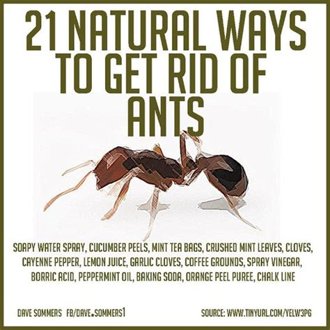 Get Rid Of Ants In Room by Ways To Get Rid Of Ants Gardening