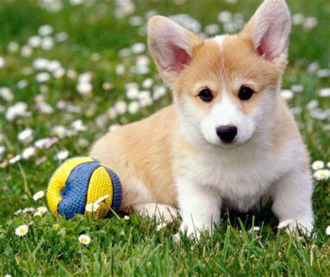 imagenes bonitas de animales image gallery imagenes de perros bonitos