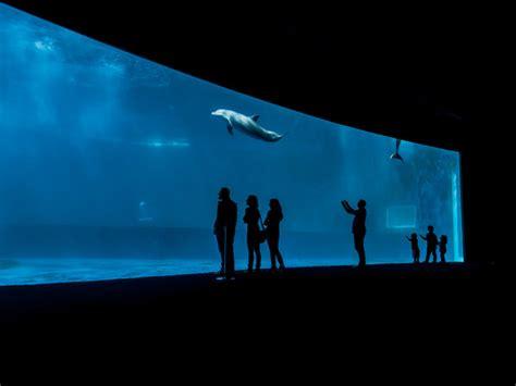 costo ingresso acquario genova acquario di genova museo arte it