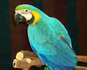 bird information types of birds and choosing a pet bird