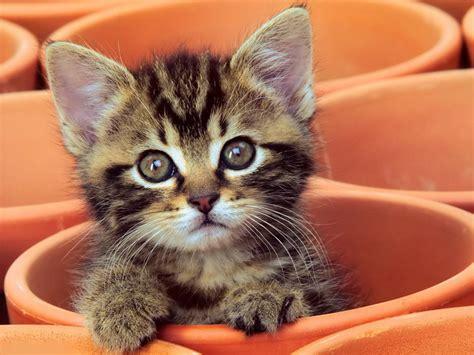 baby kitten cat curious kitten cute image 278562 on
