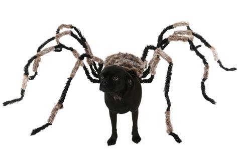 puppy spider diy spider costume costumes