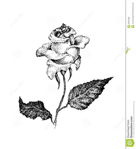 imagenes en blanco y negro de rosas rosa blanco y negro en estilo punteado tinta fotos de