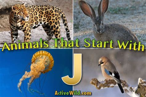 Animal J by Animals That Start With J List Of Amazing Animals