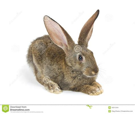 new year rabbit happy new year of rabbit stock images image 16311344