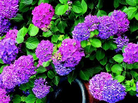 Begonia Da Esterno by Jakie Kwiaty Na Balkon 3 Balkonowe Hity Mam Na To Spos 243 B