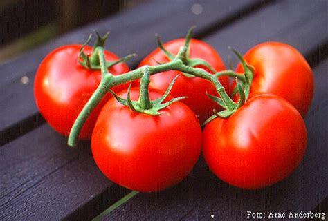 mengenal jenis jenis tanaman sayuran